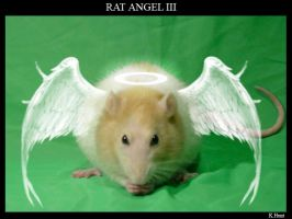 Rat Angel III by rosesburn