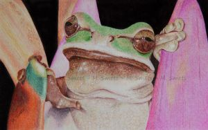 frog by photonline
