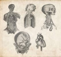 Old Anatomy Pack by Tobi-Wan
