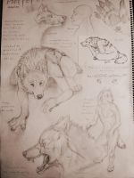 Werewolves character sheet by shadwlf910