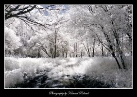 White Jungle by zozzy1980