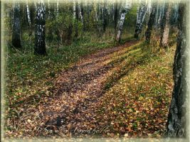 Forest road by Amrahelle