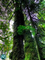 ferns on tree two by DCRIII