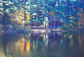 Cabin in the woods by williamwalsh