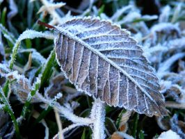 Frosted Leaf by Bimmi1111