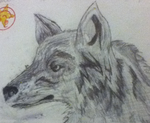 Wolf Drawing by kimbalto9