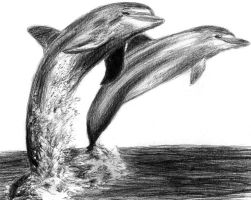 Dolphins by Amarevia