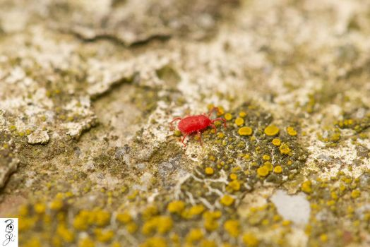This Mite be tiny by The-Dude-L-Bug