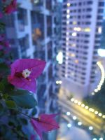 balcony flower by kimchiiWOOt