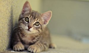 Tom by marinsuslic