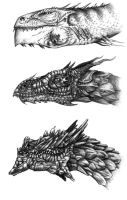 Dragon Species by TonyThalassinos