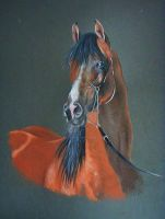 Arabian horse portrait by MCRomance13