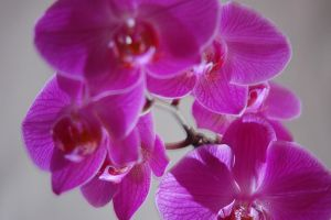 Orchid 2736 by JeffPrice