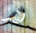Tufted Titmouse by TomSchmitt
