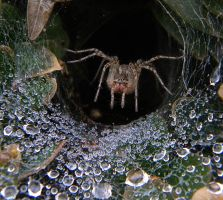 Spider by simgreensoul