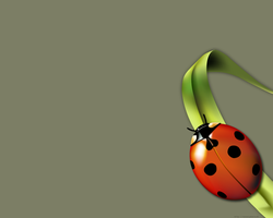 Summer-Ladybug by summer