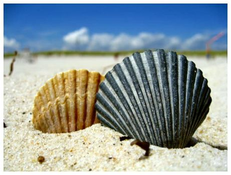 Blue and Yellow Sea Shell by fuzzychipmunks