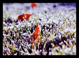 The Frosty Mornings of Winter by TeaPhotography