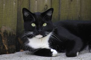 Black and white cat by NB-Photo
