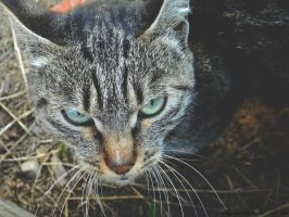 The cat 3 by EvgeniaSummer