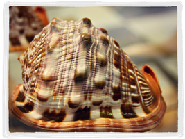 Beautiful shell 2 by SnapColorCreations
