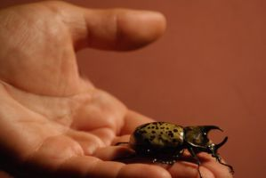This is Art the Rhino Beetle by Arie-Vampiress