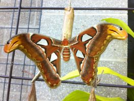 Butterfly disgiused as snakes by JenniferYoung