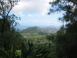 High in the hills of Oahu by SteelClaw