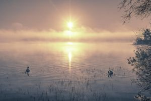 Foggy Loch Swans - Gradient Map by Spyder-art
