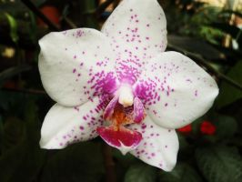 Tropical orchid 5 by WolfyKaia