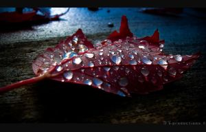 Late Leaf . . . by T7-Productions