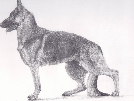 'Watchful' pencil detail by romansoloalexander