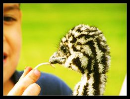 timmy with the emu by iDOtheDEW