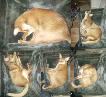 My ginger cat ^w^ by adrian1997