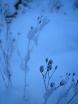 Snowy flower thing by StivStock
