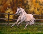 White Horse by DanBurgessTheArtist