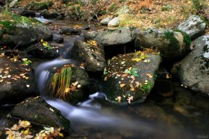 River in autumn | Rio en otono by 2Beita3
