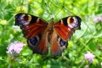 The 3B Bright Beautiful Butterfly by Cloudwhisperer67