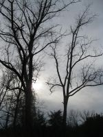 Silhouted Trees by Rachelgravesart
