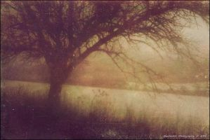 Winter Melancholy I by BecherArt