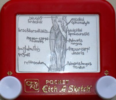 Anatomical etchasketch by pikajane