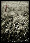 Lost by gilad