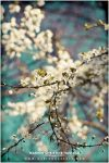 Spring is getting beautiful by Finvara