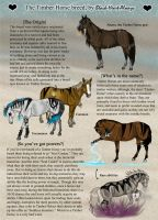 .:Timber Horse Breed Sheet:. by Black-Heart-Always