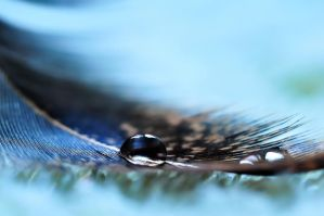 Feathered drops... by ebuisan