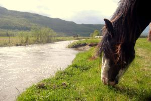 Riverhorse by mostre