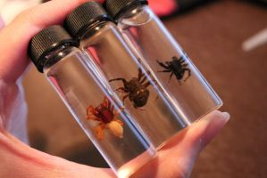 Suspended Spider Vials by BluesCuriosities