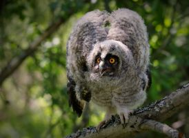 Little forest owl by Lilia73