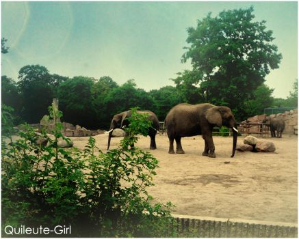 Elephants by quileute-girl