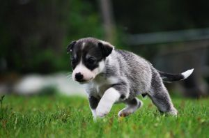 Running  2 by EmiliaLingvald